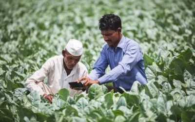 Plantix: How an AgriTech start-up is helping Indian farmers fight crop diseases